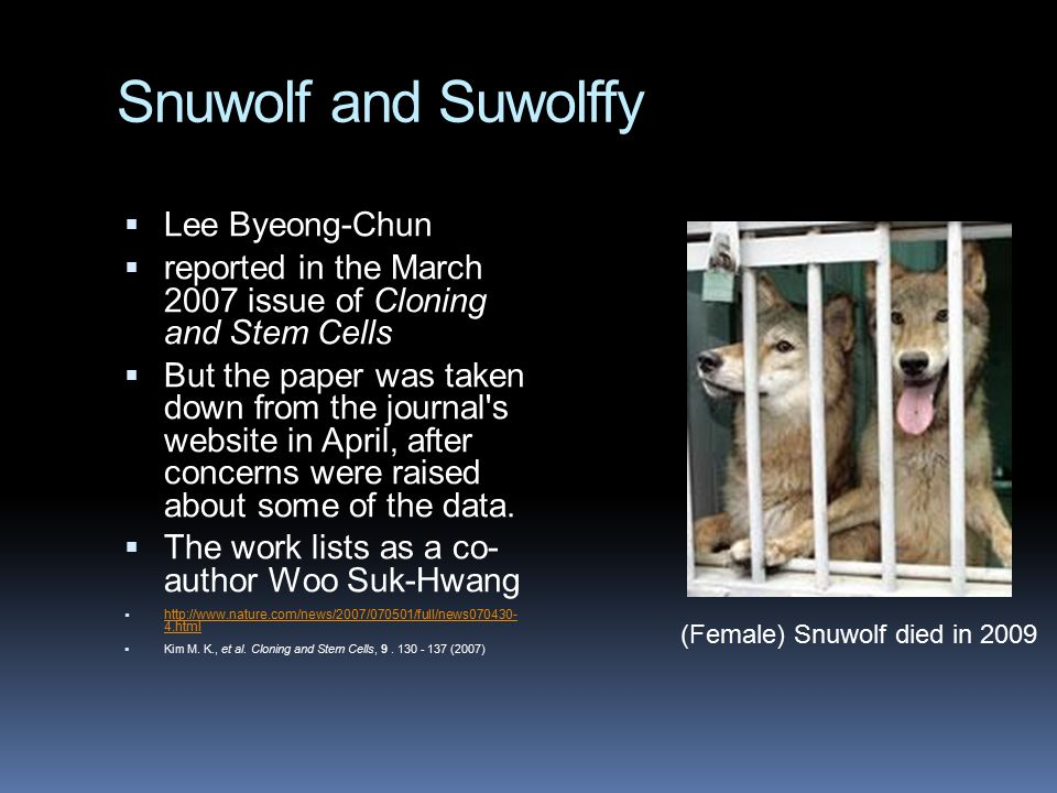 Snuwolf and Suwolffy  Lee Byeong-Chun  reported in the March 2007 issue of Cloning and Stem Cells  But the paper was taken down from the journal's