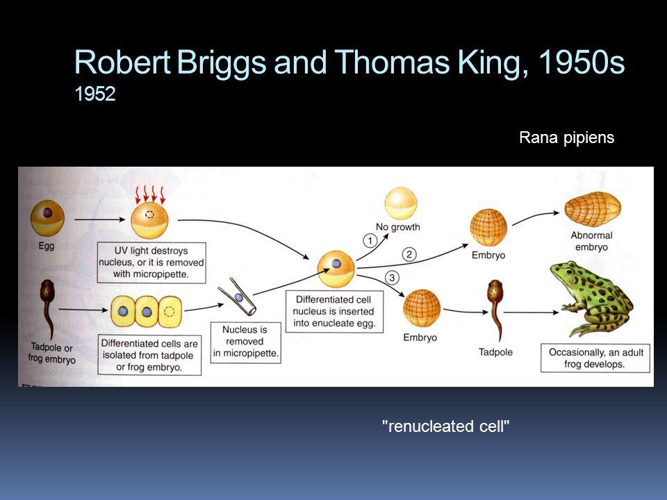 Robert Briggs and Thomas King, 1950s 1952