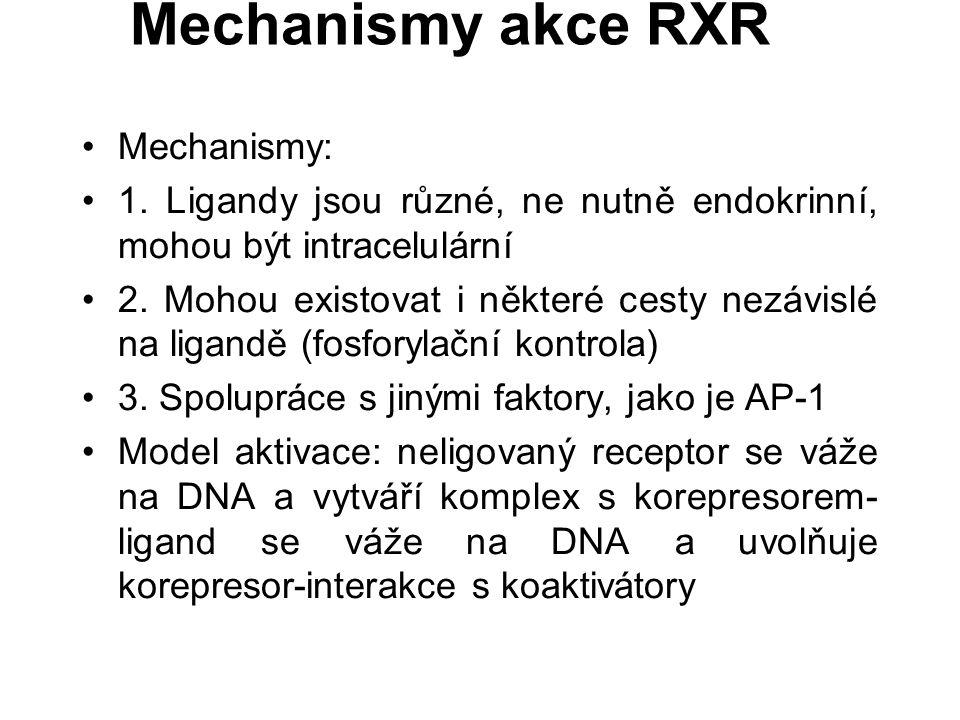 Mechanismy akce RXR Mechanismy: 1.