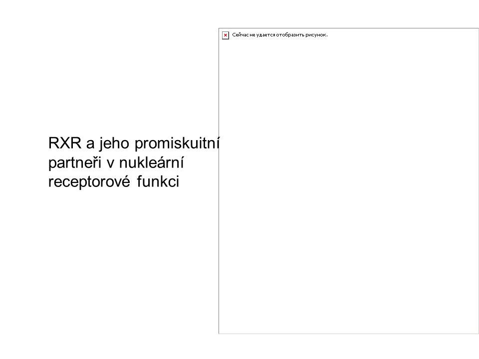 RXR a jeho promiskuitní partneři v nukleární receptorové funkci
