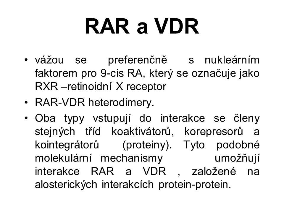 RAR a VDR vážou se preferenčně s nukleárním faktorem pro 9-cis RA, který se označuje jako RXR –retinoidní X receptor RAR-VDR heterodimery.