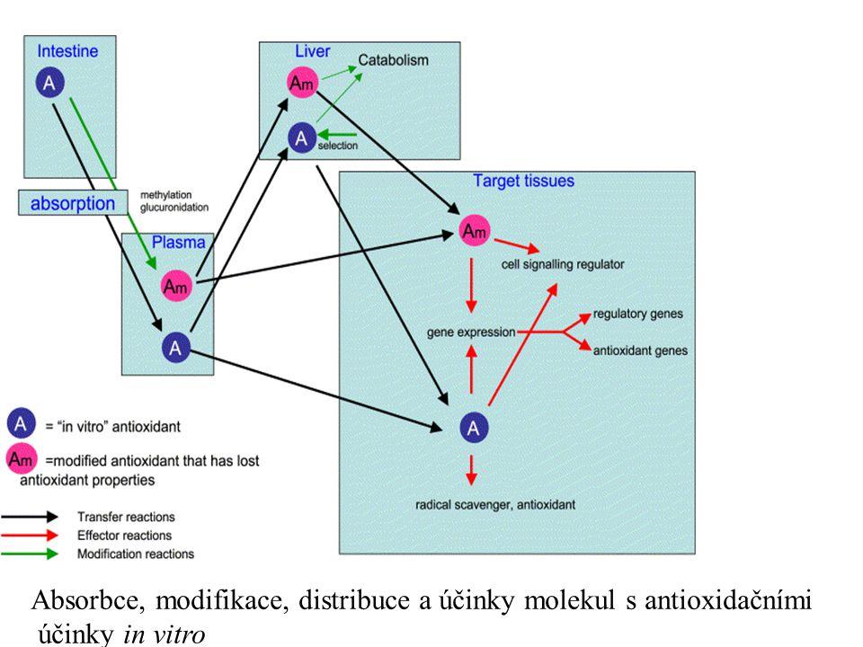 Absorbce, modifikace, distribuce a účinky molekul s antioxidačními účinky in vitro