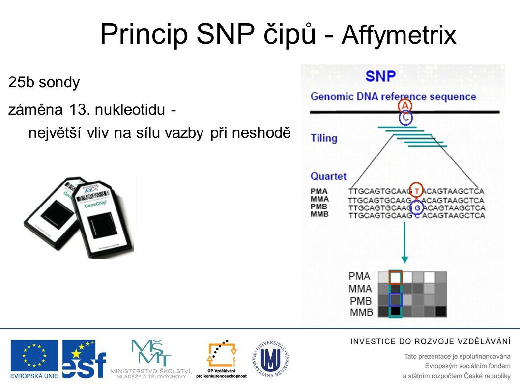 Princip SNP čipů - Affymetrix 25b sondy záměna 13. nukleotidu - největší vliv na sílu vazby při neshodě