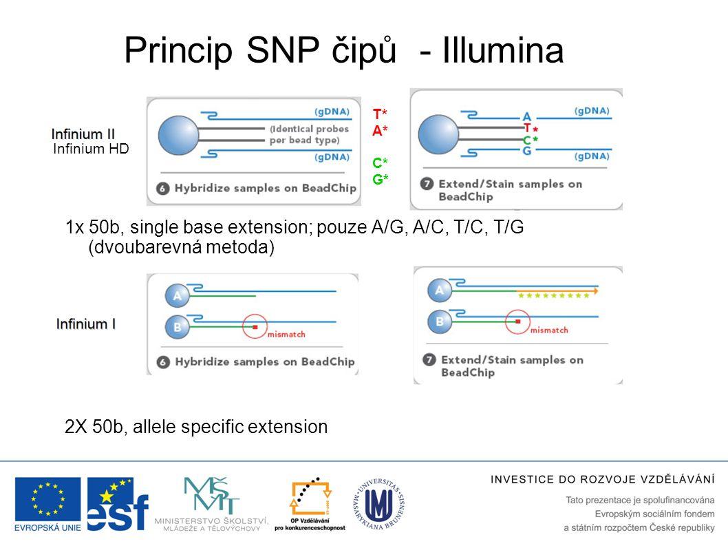 Princip SNP čipů - Illumina 2X 50b, allele specific extension 1x 50b, single base extension; pouze A/G, A/C, T/C, T/G (dvoubarevná metoda) T* A* C* G*