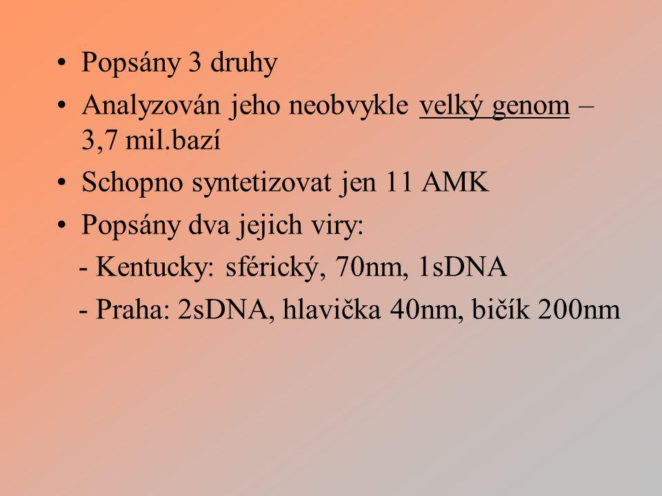 Popsány 3 druhy Analyzován jeho neobvykle velký genom – 3,7 mil.bazí Schopno syntetizovat jen 11 AMK Popsány dva jejich viry: - Kentucky: sférický, 70nm, 1sDNA - Praha: 2sDNA, hlavička 40nm, bičík 200nm