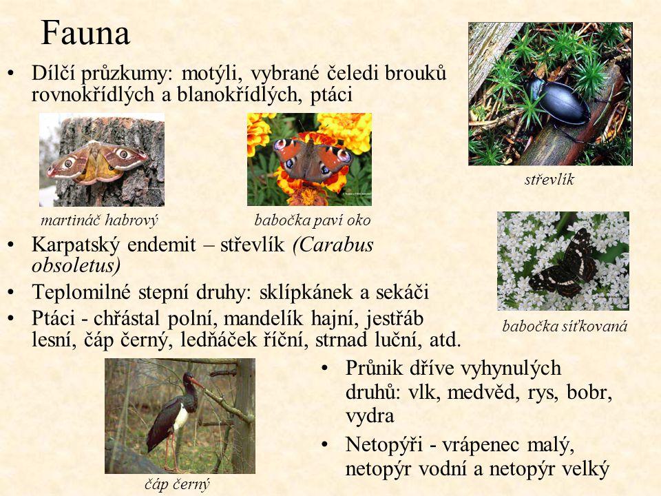 Fauna Dílčí průzkumy: motýli, vybrané čeledi brouků rovnokřídlých a blanokřídlých, ptáci Karpatský endemit – střevlík (Carabus obsoletus) Teplomilné s