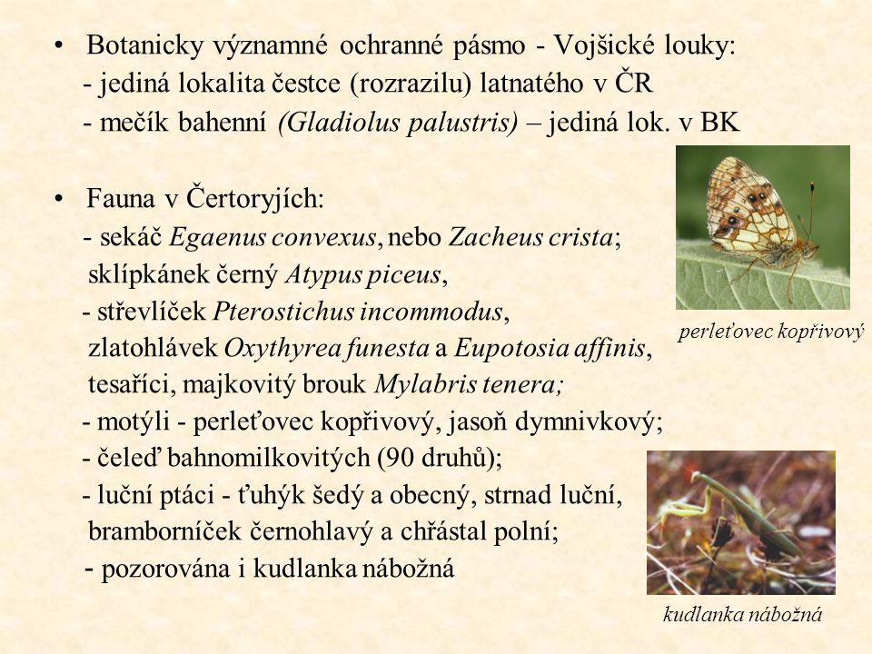 Botanicky významné ochranné pásmo - Vojšické louky: - jediná lokalita čestce (rozrazilu) latnatého v ČR - mečík bahenní (Gladiolus palustris) – jediná