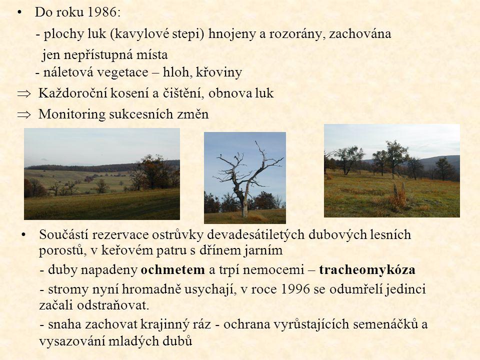 Do roku 1986: - plochy luk (kavylové stepi) hnojeny a rozorány, zachována jen nepřístupná místa - náletová vegetace – hloh, křoviny  Každoroční kosen