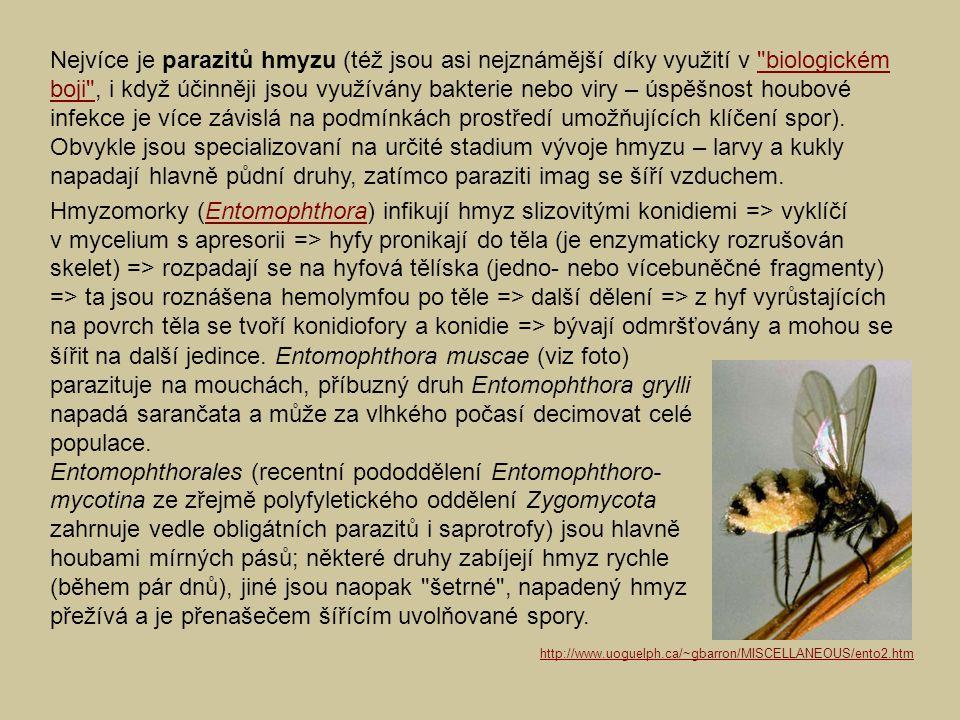 Nejvíce je parazitů hmyzu (též jsou asi nejznámější díky využití v