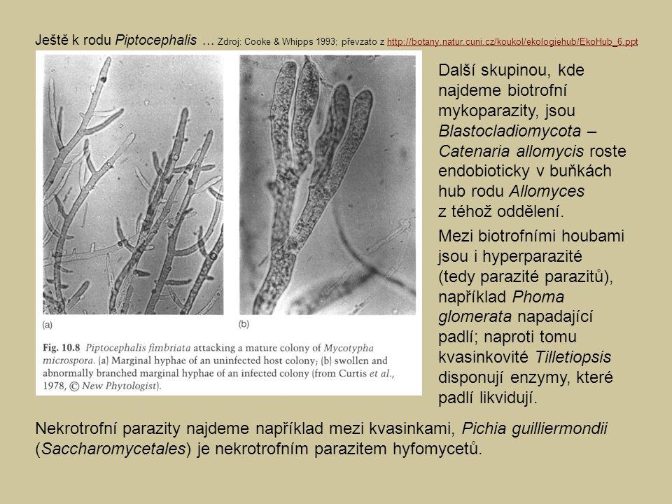 Nekrotrofní parazity najdeme například mezi kvasinkami, Pichia guilliermondii (Saccharomycetales) je nekrotrofním parazitem hyfomycetů. Ještě k rodu P