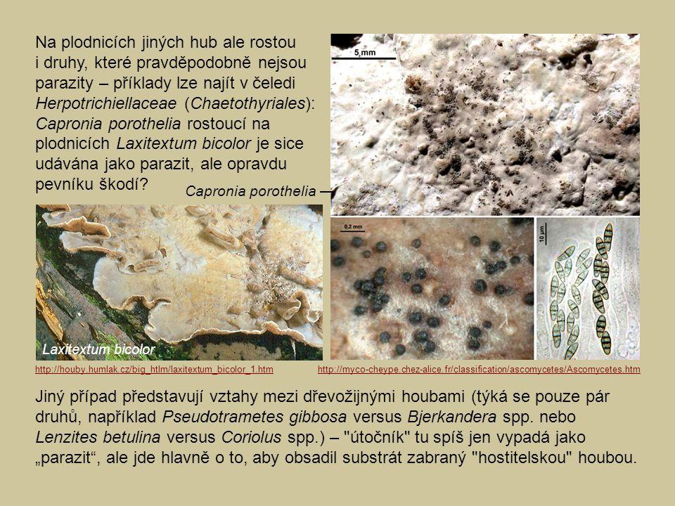 Jiný případ představují vztahy mezi dřevožijnými houbami (týká se pouze pár druhů, například Pseudotrametes gibbosa versus Bjerkandera spp. nebo Lenzi