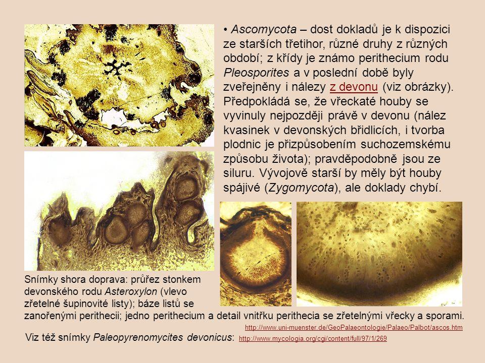 Ascomycota – dost dokladů je k dispozici ze starších třetihor, různé druhy z různých období; z křídy je známo perithecium rodu Pleosporites a v poslední době byly zveřejněny i nálezy z devonu (viz obrázky).z devonu Předpokládá se, že vřeckaté houby se vyvinuly nejpozději právě v devonu (nález kvasinek v devonských břidlicích, i tvorba plodnic je přizpůsobením suchozemskému způsobu života); pravděpodobně jsou ze siluru.