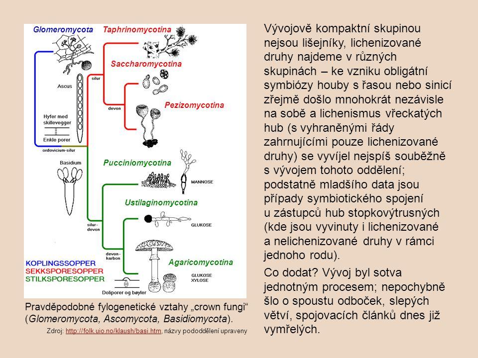 Vývojově kompaktní skupinou nejsou lišejníky, lichenizované druhy najdeme v různých skupinách – ke vzniku obligátní symbiózy houby s řasou nebo sinicí zřejmě došlo mnohokrát nezávisle na sobě a lichenismus vřeckatých hub (s vyhraněnými řády zahrnujícími pouze lichenizované druhy) se vyvíjel nejspíš souběžně s vývojem tohoto oddělení; podstatně mladšího data jsou případy symbiotického spojení u zástupců hub stopkovýtrusných (kde jsou vyvinuty i lichenizované a nelichenizované druhy v rámci jednoho rodu).