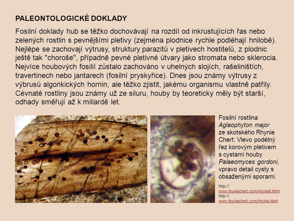 PALEONTOLOGICKÉ DOKLADY Fosilní doklady hub se těžko dochovávají na rozdíl od inkrustujících řas nebo zelených rostlin s pevnějšími pletivy (zejména plodnice rychle podléhají hnilobě).