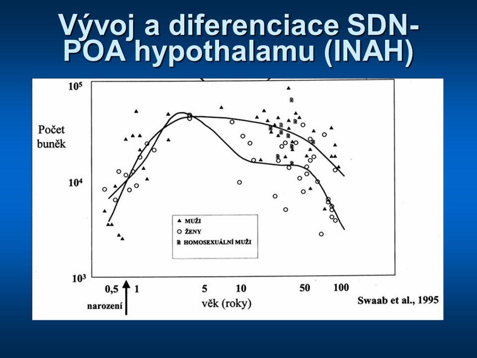 Vývoj a diferenciace SDN- POA hypothalamu (INAH)