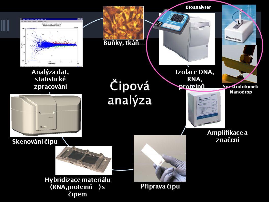 Čipová analýza Buňky, tkáň… Amplifikace a značení Příprava čipu Hybridizace materiálu (RNA,proteinů…) s čipem Skenování čipu Analýza dat, statistické