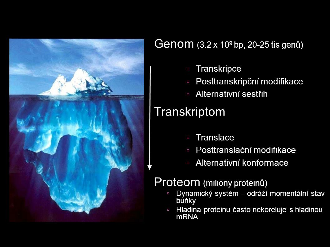 Genom (3.2 x 10 9 bp, 20-25 tis genů) Transkriptom Proteom (miliony proteinů)  Dynamický systém – odráží momentální stav buňky  Hladina proteinu čas