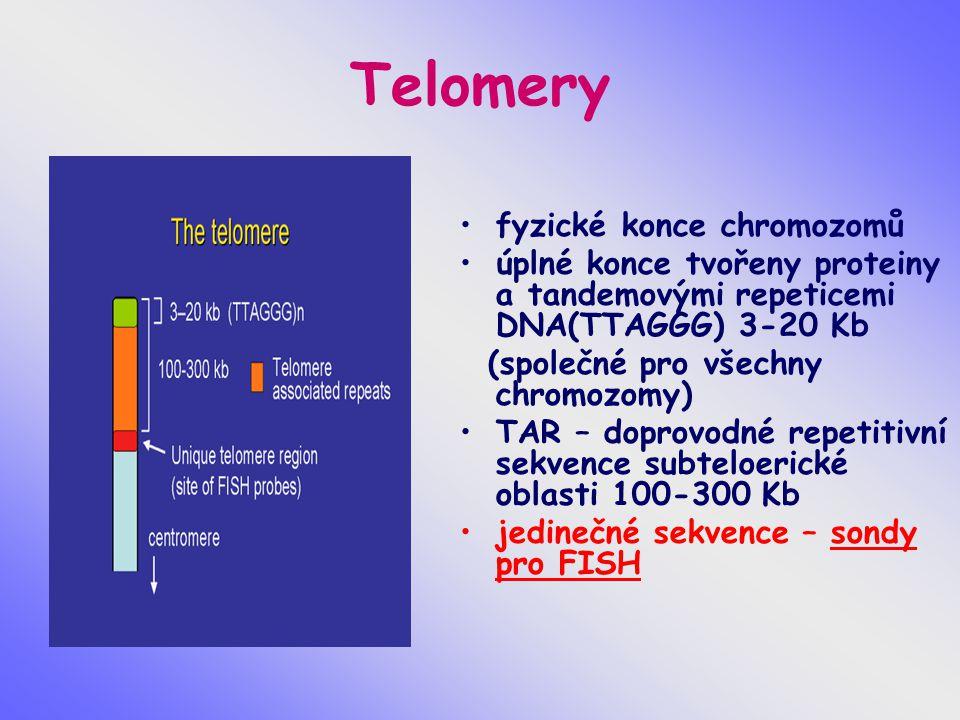 Telomery fyzické konce chromozomů úplné konce tvořeny proteiny a tandemovými repeticemi DNA(TTAGGG) 3-20 Kb (společné pro všechny chromozomy) TAR – do