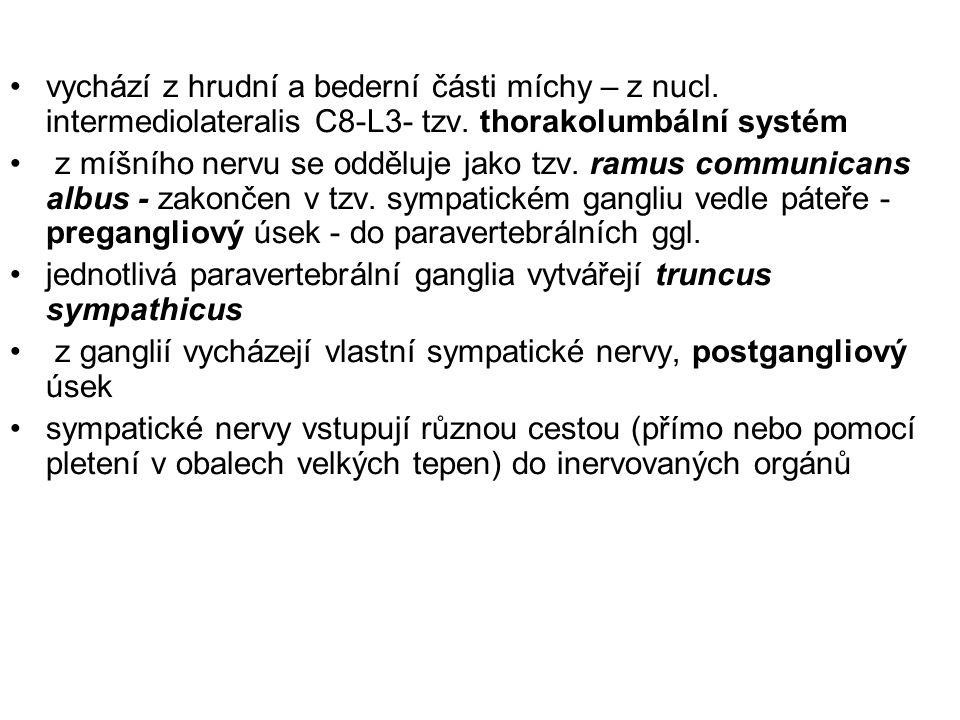 vychází z hrudní a bederní části míchy – z nucl. intermediolateralis C8-L3- tzv. thorakolumbální systém z míšního nervu se odděluje jako tzv. ramus co