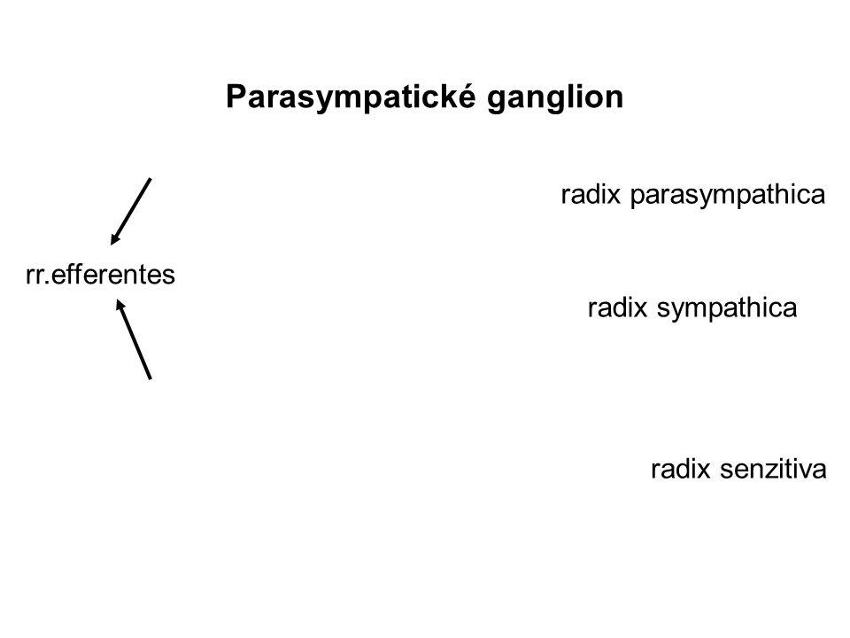 Parasympatické ganglion rr.efferentes radix senzitiva radix sympathica radix parasympathica