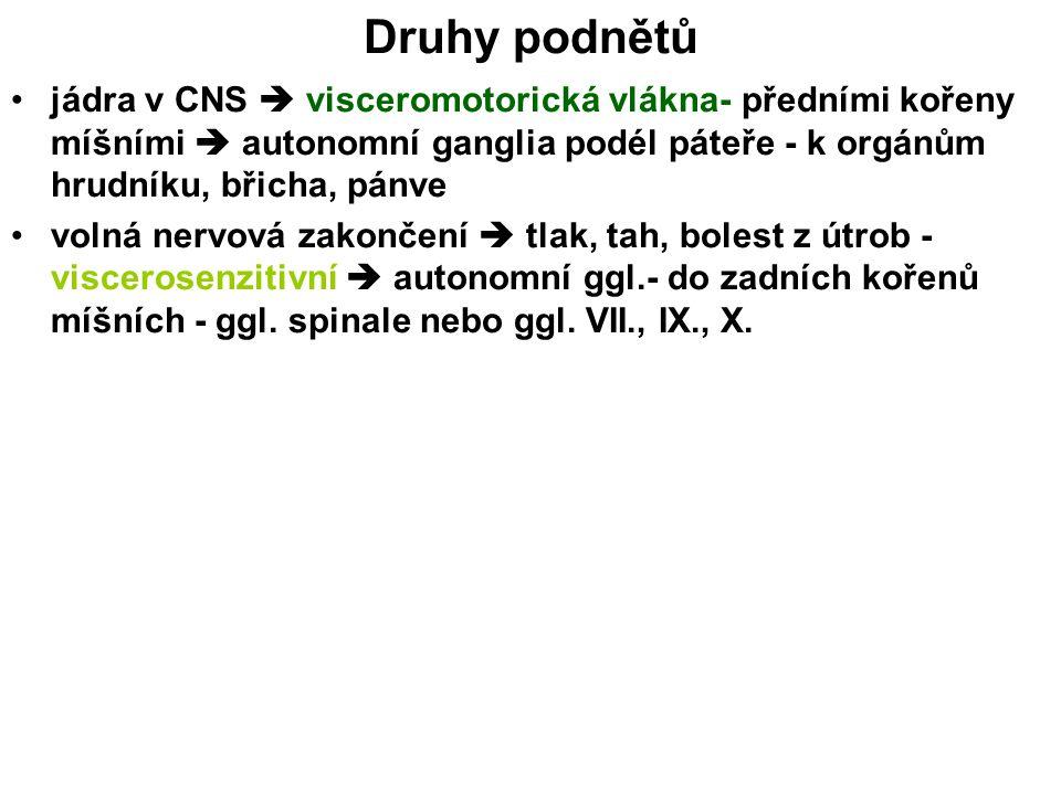 Druhy podnětů jádra v CNS  visceromotorická vlákna- předními kořeny míšními  autonomní ganglia podél páteře - k orgánům hrudníku, břicha, pánve voln