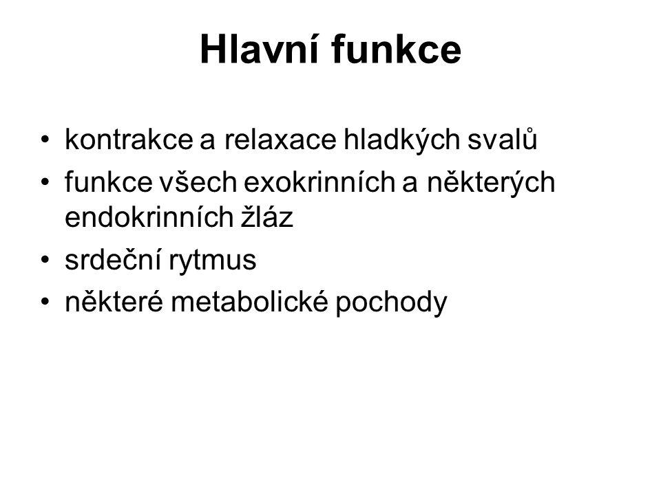 Hlavní funkce kontrakce a relaxace hladkých svalů funkce všech exokrinních a některých endokrinních žláz srdeční rytmus některé metabolické pochody