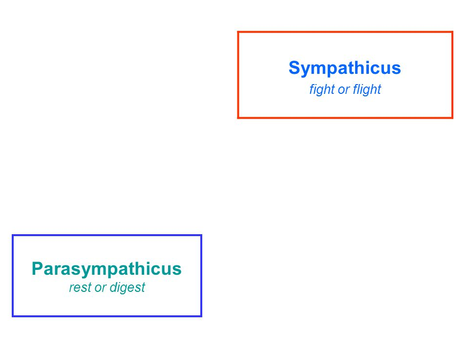 vychází ze sakrálního úseku míchy – pars sacralis S2-S4 (křížový parasympatikus) a z některých hlavových nervů- pars cranialis- III.,VII.,IX.,X.