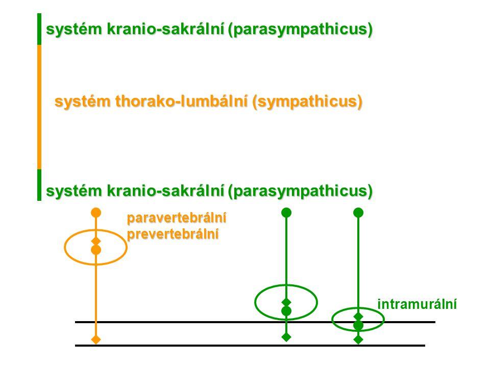systém kranio-sakrální (parasympathicus) systém thorako-lumbální (sympathicus) systém kranio-sakrální (parasympathicus) intramurální paravertebrálnípr