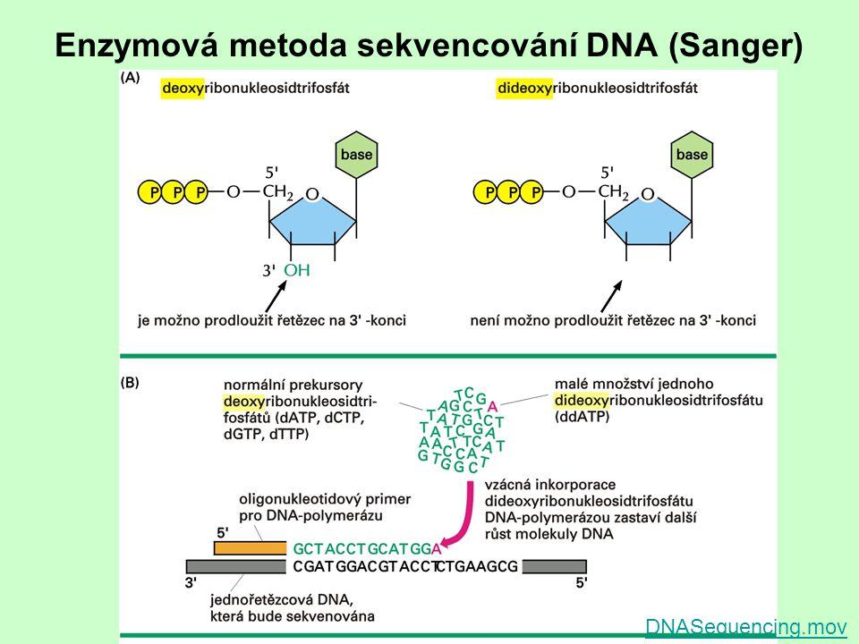 Enzymová metoda sekvencování DNA (Sanger) DNASequencing.mov