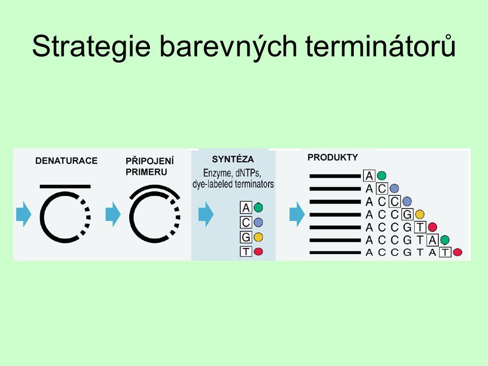 Strategie barevných terminátorů