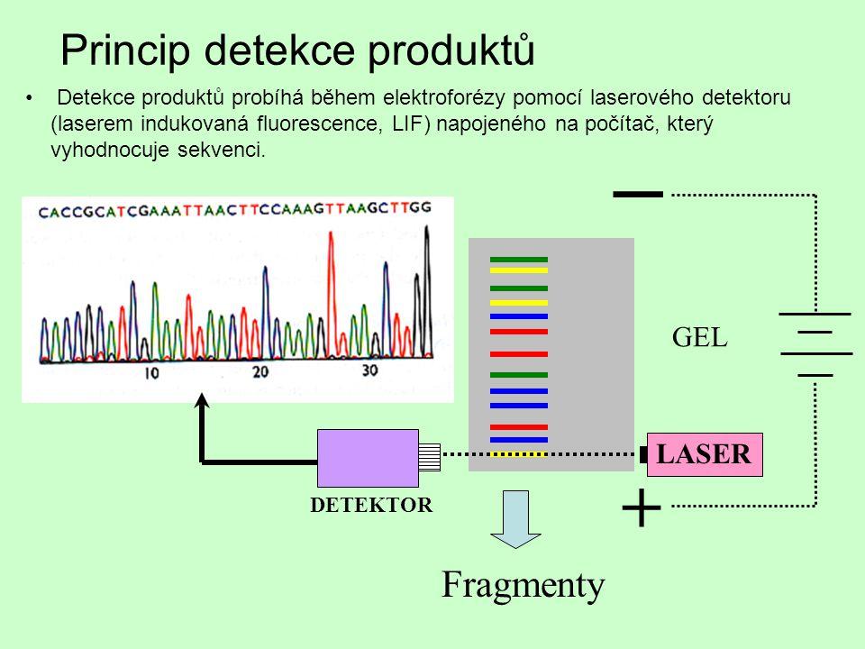 GEL + _ LASER DETEKTOR Princip detekce produktů Fragmenty Detekce produktů probíhá během elektroforézy pomocí laserového detektoru (laserem indukovaná