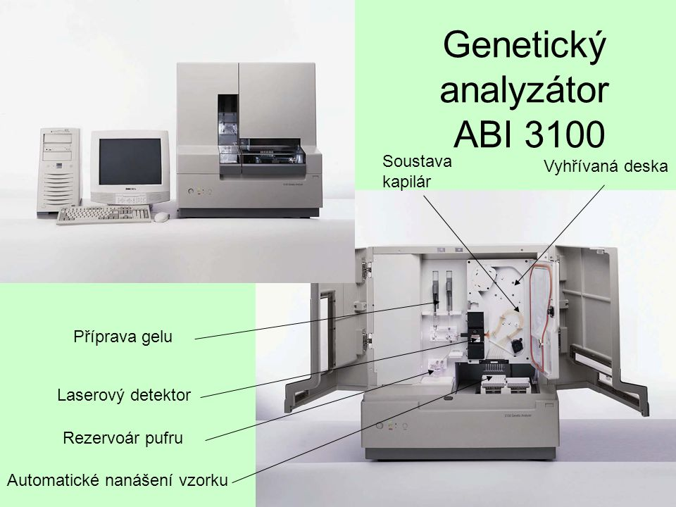 Genetický analyzátor ABI 3100 Laserový detektor Příprava gelu Rezervoár pufru Automatické nanášení vzorku Soustava kapilár Vyhřívaná deska