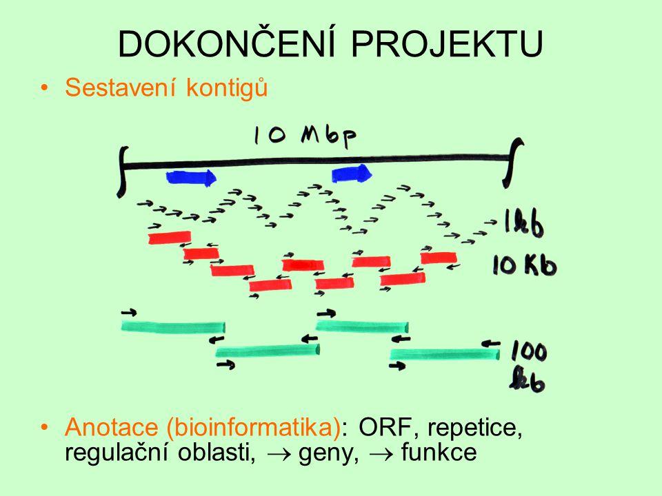 DOKONČENÍ PROJEKTU Sestavení kontigů Anotace (bioinformatika): ORF, repetice, regulační oblasti,  geny,  funkce