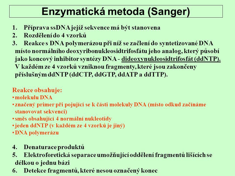 Enzymatická metoda (Sanger) 1. Příprava ssDNA jejíž sekvence má být stanovena 2. Rozdělení do 4 vzorků 3. Reakce s DNA polymerázou při níž se začlení