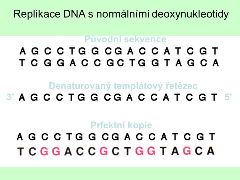Původní sekvence Denaturovaný templátový řetězec Prfektní kopie 3'5' Replikace DNA s normálními deoxynukleotidy