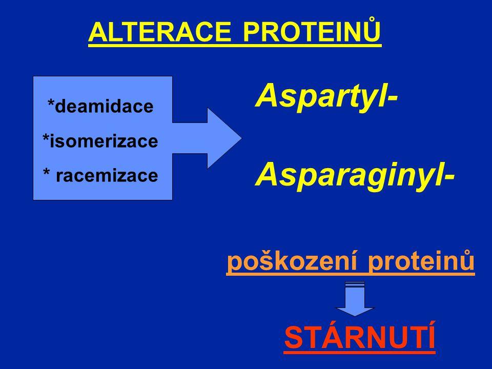 ALTERACE PROTEINŮ Aspartyl- Asparaginyl- *deamidace *isomerizace * racemizace poškození proteinů STÁRNUTÍ