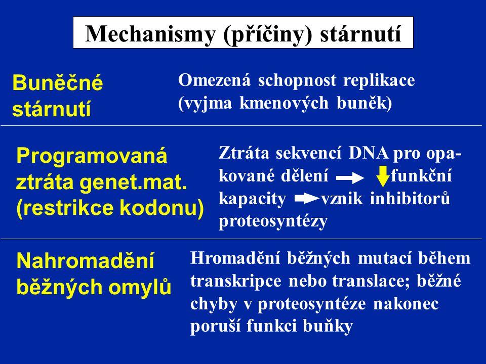 Mechanismy (příčiny) stárnutí Buněčné stárnutí Omezená schopnost replikace (vyjma kmenových buněk) Programovaná ztráta genet.mat. (restrikce kodonu) Z