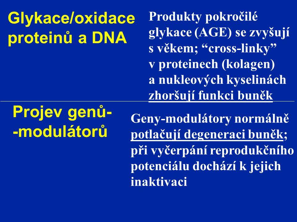 """Glykace/oxidace proteinů a DNA Produkty pokročilé glykace (AGE) se zvyšují s věkem; """"cross-linky"""" v proteinech (kolagen) a nukleových kyselinách zhorš"""