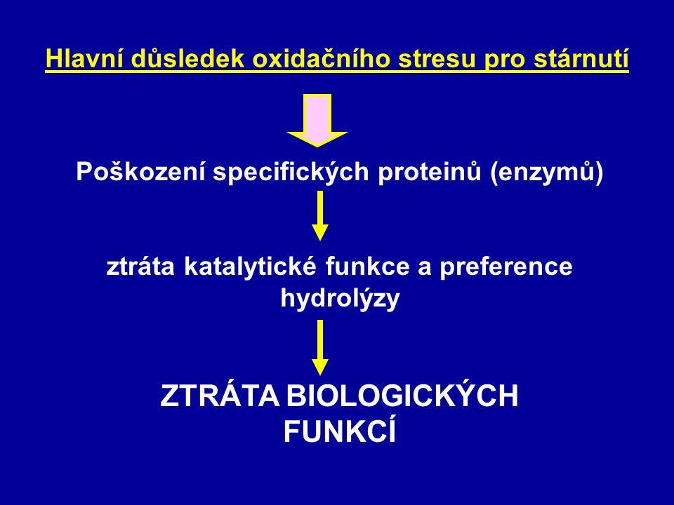 Hlavní důsledek oxidačního stresu pro stárnutí Poškození specifických proteinů (enzymů) ztráta katalytické funkce a preference hydrolýzy ZTRÁTA BIOLOG