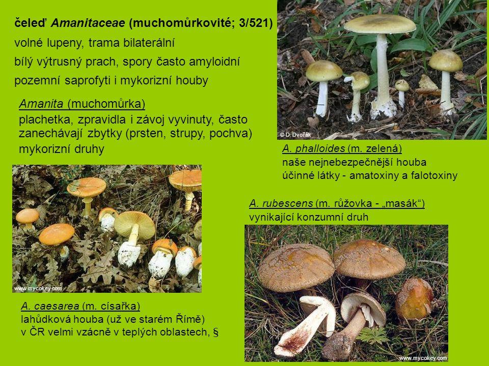 """A. caesarea (m. císařka) lahůdková houba (už ve starém Římě) v ČR velmi vzácně v teplých oblastech, § A. rubescens (m. růžovka - """"masák"""") vynikajíc"""