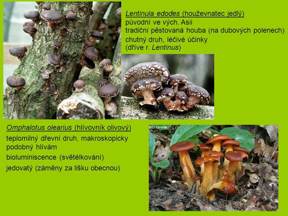 Lentinula edodes (houževnatec jedlý) původní ve vých. Asii tradiční pěstovaná houba (na dubových polenech) chutný druh, léčivé účinky (dříve r. Lenti