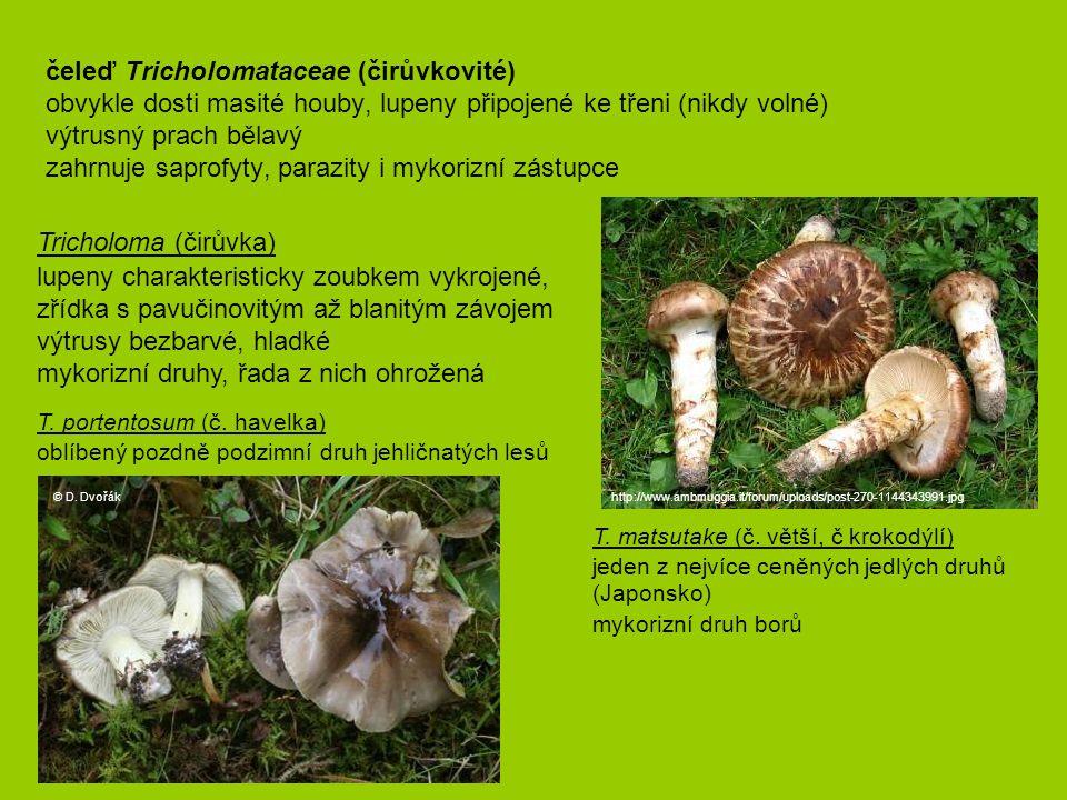 čeleď Tricholomataceae (čirůvkovité) obvykle dosti masité houby, lupeny připojené ke třeni (nikdy volné) výtrusný prach bělavý zahrnuje saprofyty, par