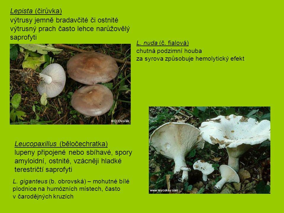 Lepista (čirůvka) výtrusy jemně bradavčité či ostnité výtrusný prach často lehce narůžovělý saprofyti L. nuda (č. fialová) chutná podzimní houba za