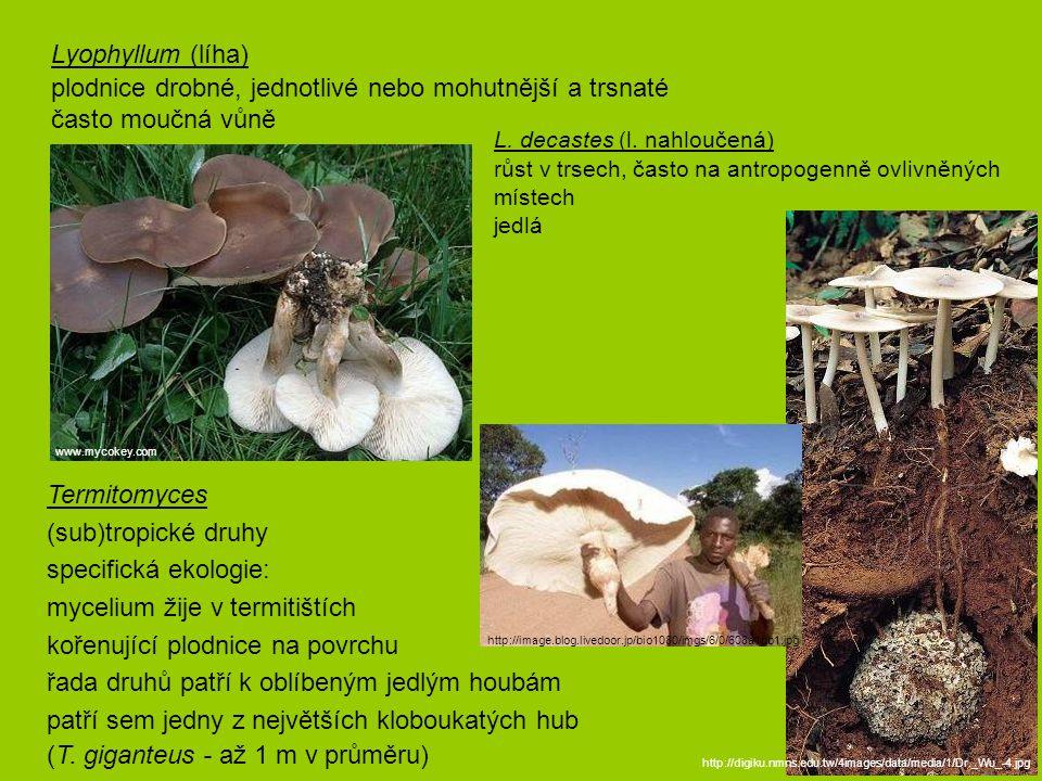 Lyophyllum (líha) plodnice drobné, jednotlivé nebo mohutnější a trsnaté často moučná vůně http://image.blog.livedoor.jp/bio1080/imgs/6/0/608a1db1.jpg