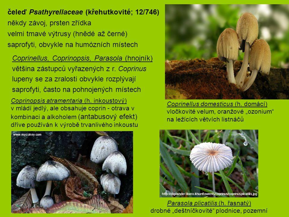 Coprinopsis atramentaria (h. inkoustový) v mládí jedlý, ale obsahuje coprin - otrava v kombinaci a alkoholem (antabusový efekt) dříve používán k výrob