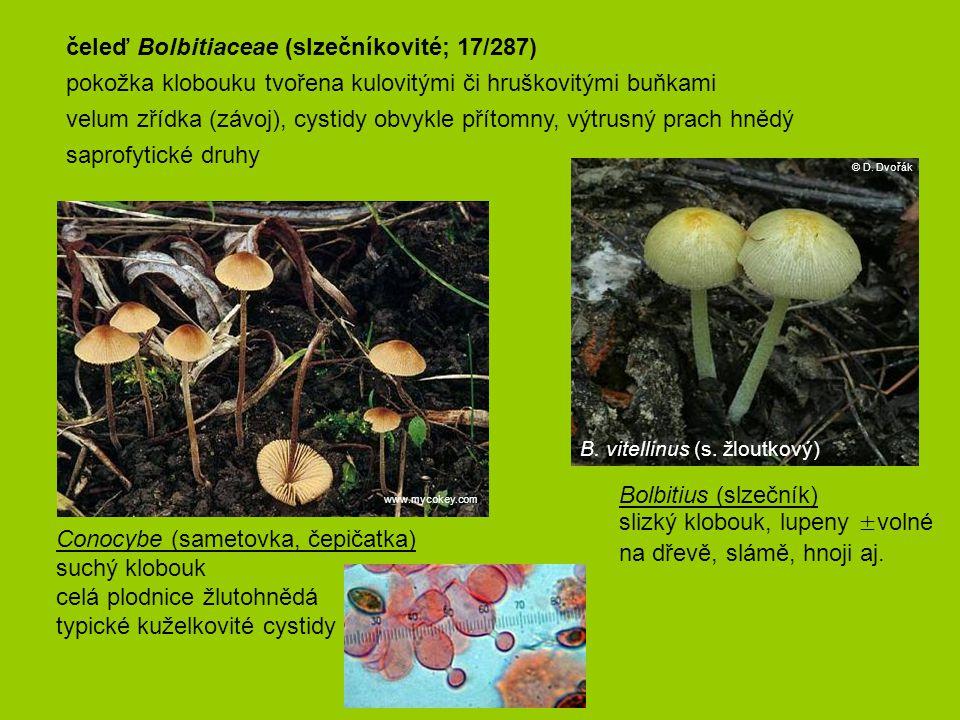 Bolbitius (slzečník) slizký klobouk, lupeny ±volné na dřevě, slámě, hnoji aj. B. vitellinus (s. žloutkový) © D. Dvořák čeleď Bolbitiaceae (slzečníkovi