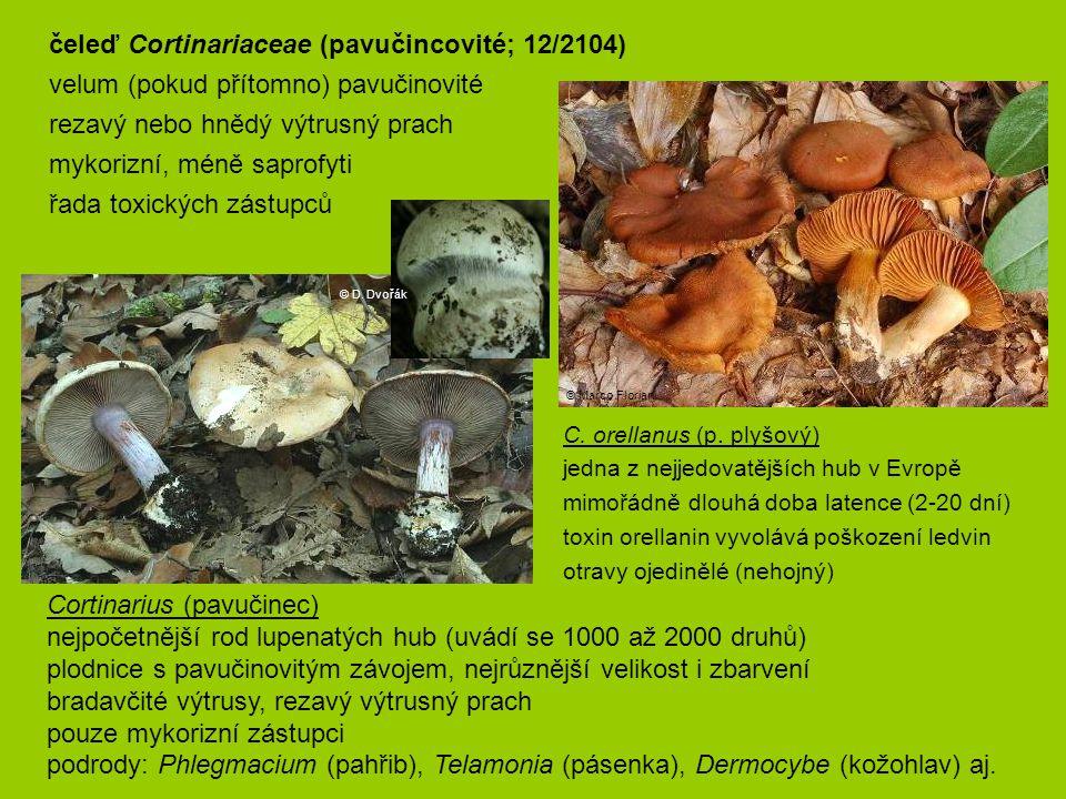 C. orellanus (p. plyšový) jedna z nejjedovatějších hub v Evropě mimořádně dlouhá doba latence (2-20 dní) toxin orellanin vyvolává poškození ledvin otr