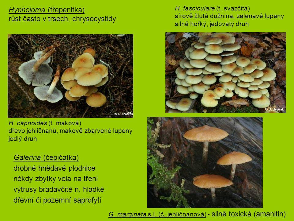Hypholoma (třepenitka) růst často v trsech, chrysocystidy H. capnoides (t. maková) dřevo jehličnanů, makově zbarvené lupeny jedlý druh H. fasciculare