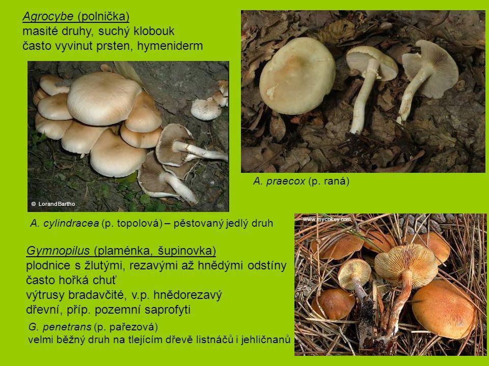 Agrocybe (polnička) masité druhy, suchý klobouk často vyvinut prsten, hymeniderm A. praecox (p. raná) Gymnopilus (plaménka, šupinovka) plodnice s žlut