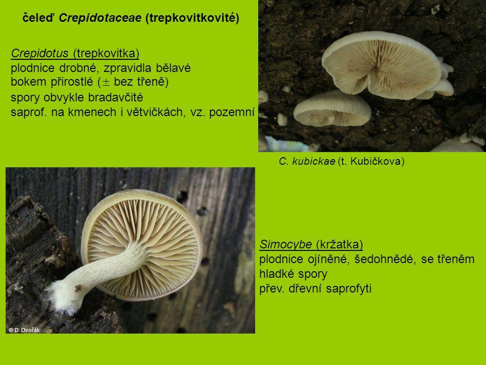 Crepidotus (trepkovitka) plodnice drobné, zpravidla bělavé bokem přirostlé (± bez třeně) spory obvykle bradavčité saprof. na kmenech i větvičkách, vz.